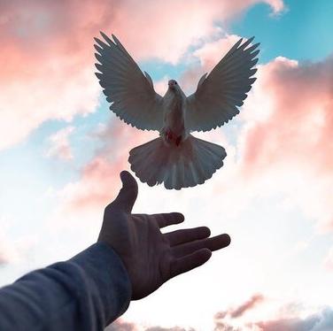Аренда голубей