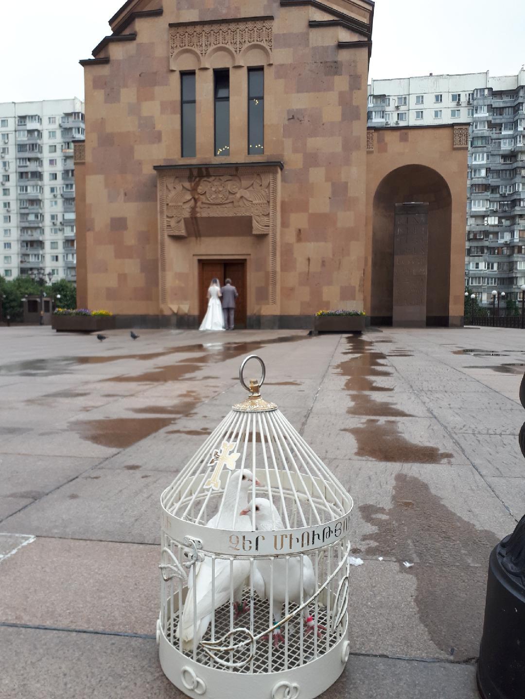 Голуби на венчание